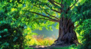 欲为大树,莫与草争!