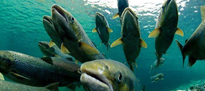 三条鱼的故事
